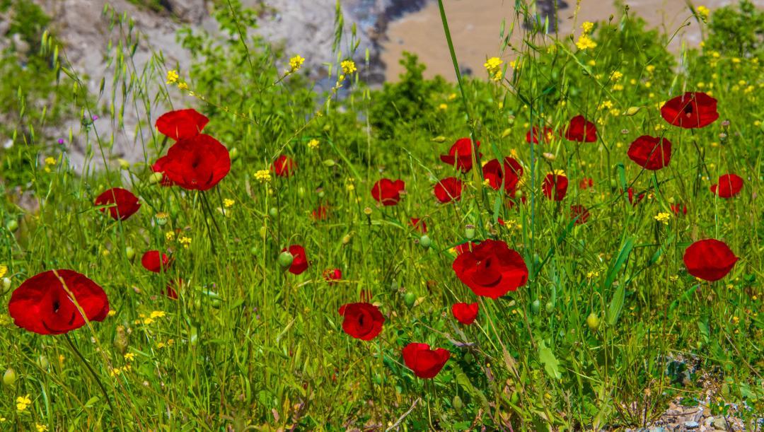 Spring in Kurdistan